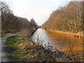 SD7300 : Bridgewater Canal at Bittern Pits Wood by David Dixon