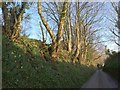 SX1456 : Lane near Lerryn by Derek Harper