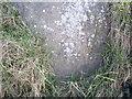 SJ5275 : Cut Mark: Manley Road, Frodsham by VBForever