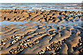 TM4872 : Intertidal zone : Week 12