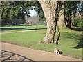 TQ8110 : Squirrel at Alexandra Park by Oast House Archive