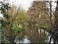 TQ1730 : River Arun at Horsham by Paul Gillett