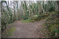 TQ7810 : Footpath, Church Wood by N Chadwick