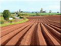 SO6522 : Potato tramlines : Week 14