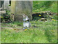 TG5208 : Grey Squirrel in Gt Yarmouth cemetery by Adrian S Pye
