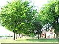 TF3608 : The Green, Parson Drove by Richard Humphrey