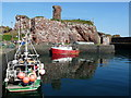 NT6779 : Dunbar Harbour and Kittiwake Colony : Week 17
