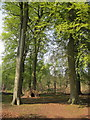 SK6376 : Hardwick Wood, Clumber Park by Peter Turner