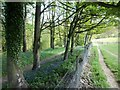 SP0835 : Woodland and bluebells by Michael Dibb