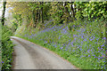 SX0662 : Lanivet: bluebell bank by Martin Bodman