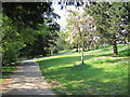 TQ8010 : Alexandra Park by Oast House Archive