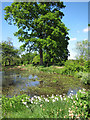 TQ8332 : Egg Pond at Hole Park gardens by Oast House Archive