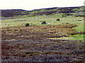 NZ0600 : Grouse butts on Marrick Moor by Maigheach-gheal