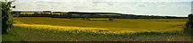 TL0296 : Rape Fields by Chris Lowe