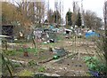 TQ3574 : Allotments, Honor Oak Park by Derek Harper