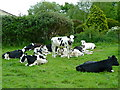ST5486 : Cattle at Severn Lodge Farm, New Passage by Anthony O'Neil