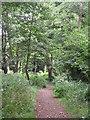 TQ3766 : Path in High Broom Wood by Mike Quinn