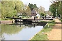 SU6067 : Duck at  the lockgates by Bill Nicholls