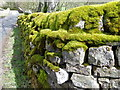 NY9903 : Moss covered wall, Langthwaite by Miss Steel