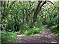 SW8761 : Diverging Woodland Paths by Tony Atkin