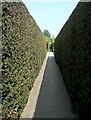 TQ8038 : Walkway at Sissinghurst Castle Gardens by Graham Horn