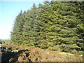 NZ0644 : Sitka Spruce plantation by brian clark