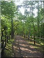 TQ4971 : Bridleway in Joyden's Wood by Marathon
