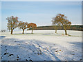 SK5050 : Annesley Park in the snow by Trevor Rickard