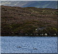 NN7045 : Pair of Red-throated Divers on Lochan Creag a' Mhadaidh by Russel Wills