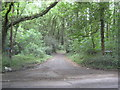 TQ0193 : Chalfont St Peter: Old Shire Lane by Nigel Cox