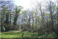 TQ3764 : Woodland by Shirley Heath Recreation Ground by Nigel Chadwick