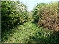 SP6634 : Former Railway Track near Tingewick Mill by David Hillas