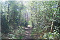 TQ3664 : LOOP through Spring Park Wood by Nigel Chadwick