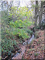 TQ4466 : The Kyd Brook - Main Branch, west of Petts Wood Recreation Ground (3) by Mike Quinn