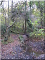 TQ4466 : The Kyd Brook - Main Branch, in Roundabout Wood by Mike Quinn
