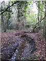 TQ4466 : The Kyd Brook - Main Branch, in Roundabout Wood (3) by Mike Quinn