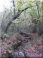 TQ4366 : The Kyd Brook - Main Branch, in Sparrow Wood (4) by Mike Quinn