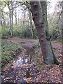 TQ4366 : The Kyd Brook - Main Branch, in Sparrow Wood (5) by Mike Quinn