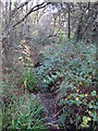 TQ4366 : The Kyd Brook - Main Branch, in Sparrow Wood (11) by Mike Quinn