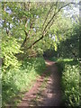 TQ4568 : Path in Petts Wood by Marathon