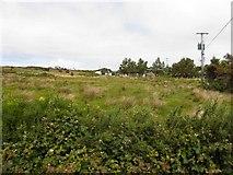 B8929 : Cnoc na hArdagh Bige by Kenneth  Allen