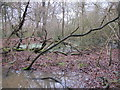 TQ4264 : Lake on the eastern edge of Lake Wood (2) by Mike Quinn