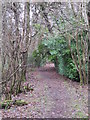 TQ4264 : Footpath in Lake Wood (2) by Mike Quinn