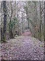TQ4264 : Footpath in Lake Wood (3) by Mike Quinn