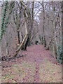 TQ4263 : Footpath in Lake Wood by Mike Quinn