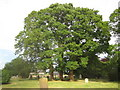 TL3855 : Comberton: Trees in the graveyard of St Mary's Church by Nigel Cox