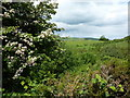 SJ9878 : Hawthorn and brambles in Dunge Clough by Peter Barr