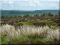 SJ9977 : Sedge, cotton grass, bilberries and conifers by Peter Barr