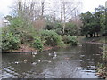 TQ4066 : Pond, Pickhurst Lane Recreation Gardens (3) by Mike Quinn