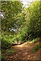 SP5605 : Trail up the hill in Shotover Country Park by Steve Daniels